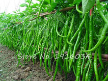 Hot Selling Long red and Green Chilli Pepper Seeds Ornamental Fruit Vegetable Seeds Patio Potted Plant Pepper Seeds - 400 PCS(China)