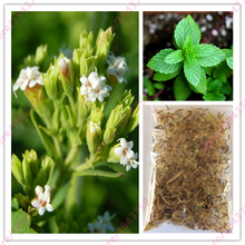 500 pcs new Stevia Seeds, Stevia Herb Seeds, Natural Sugar Substitute Herb Seeds,stevia rebaudiana bonsai for home garden plants
