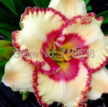 50 pcs / bag, Hemerocallis seed,tawny daylily,Potted planting,planting seasons, flowering plants