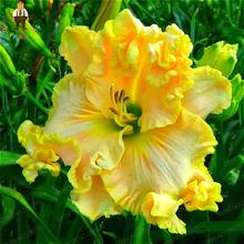 100pcs/bag Special Daylily Flowers Seed Home Jardin Bonsai Sementes Hemerocallis Seeds Health Plant Can Be Eat As Vegetable Food