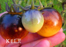 New Arrival!Vegetable seeds,VERY RARE BUMBLE BEE HEIRLOOM TOMATO! LOW ACID 50 PCS/Bag Mini fruit vegetable garden,#NFCG8C