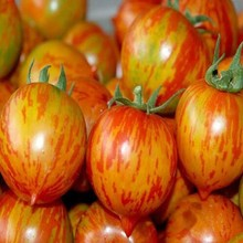 1 Original Pack Jinlong red color peach tomato Balcony fruits Vegetables Tomatoes Potted Seeds(China)