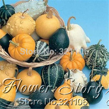 1 Pack 10 Seed  Of Odd Shape Be Riotous With Colour Doll Pumpkin Seeds .One Original Pack.Free Shipping.