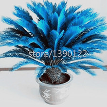 10PCS mini blue Sago Cycas Seeds revoluta seeds bonsai  tree seeds Potted Flower Seed for DIY Home Garden Household Items