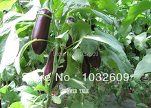 Free Shipping 150pcs Purple Long Eggplant Seeds Wholesale Garden Supplies For Healthy Vegetable Seeds Eggplant FTE006(China)