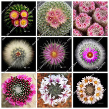 2017 new 100 Pcs Cactus Seeds Mix Organic Ornamental Seed Rare succulents, can purify the air and prevent radiation