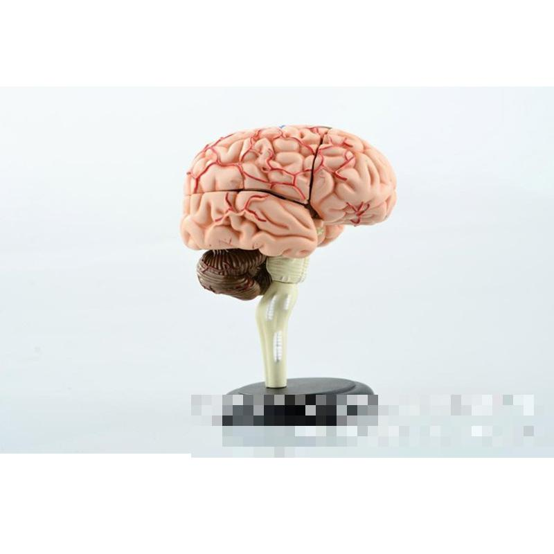 brain human structure model biology teaching medical equipment assembling toys, 32parts,medical model<br>