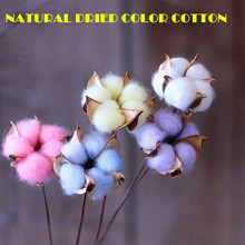 New Natural Dried Flower Cotton Dry Lotus Rural Style Eternal Life of The Technology of The Exhibition Art Wedding Free Shipping