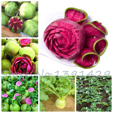 100 pcs/ bag Red radish seed, health green vegetable and Fruit seeds Big Harvest,rare fruit big Promotions and free shipping !!!(China)