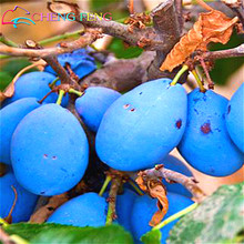 High Quality 10 Seeds / Pack Black Brin Plum Seeds Very Tasty Prune Fruit Seed Tree Jardin Seeds Vegetables And Fruits pot Plant
