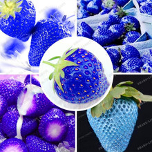 500pcs Blue Fragaria Tree Seed,Very Delicious Rare Blue Strawberry  Fruit Seeds For Home & Garden Bonsai Seeds Sent Rose Gift