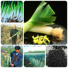 100 pcs / bag Sterilization vegetable seeds, Giant garlic, leek seeds, China green onion, Giant Onion Seeds, Garden Bonsai Plant