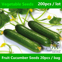 New Fruit Cucumber Seeds For Planting 200 pcs, Cucumis Sativus Linn. Seeds Natural Plant, Vegetable Seeds Welcomed By The Market