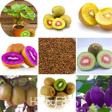 New Seeds 2017!100 Seeds/pack Mini Actinidia Small Potted Plant Seeds of Fruit Trees Beautiful Bonsai Kiwi Seeds,#50DNEP(China)