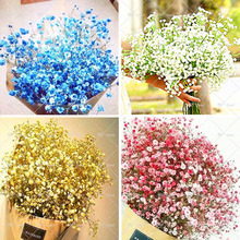 Four kinds of color, all over the sky star seeds, 50 seeds / bag, rare bonsai flowers all over the sky of stars seeds