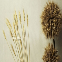 New 60cm 100pcs Natural Real Artificial Wheat Dried Branches Flower Wedding Home Decor Green Orange Fake Foliage FL1341