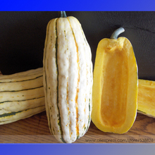 Delicata Little Sweet Squash Organic Seeds, Professional Pack, 10 Seeds / Pack, Tasty Pumpkin Vegetables #NF710