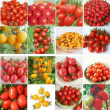 500pcs 24 KINDS Tomoto Seeds mixed packed Purple Black Red Yellow Green Cherry Peach Pear Tomato Seed Organic Food for Garden(China)