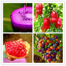 4 kind fruit seeds,include big apple seeds and pomegranate  ,quality seeds and low price  total 200+ seeds