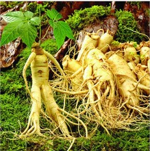 100pcsVegetables and fruit seeds herbal ginseng seeds white seed american  Bonsai plants Seeds for home & garden