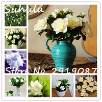 Gardenia-Seeds-Cape-Jasmine-60seeds-bag-beautiful-flower-seeds-smell-beautiful-flowers-potted-plants-diy-home.jpg_200x200