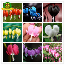 2017 HOT SALE 200pcs Bleeding Heart Flower Seeds Dicentra spectabilis Sweet Hearts Wallet Peony Flower Home Garden Plant
