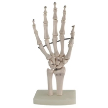 Hand joint model Hand bones Dissection Medical wrist bones free shipping(China)