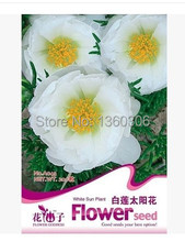 Potted flowers and plants Beautiful fairy flower seeds seed color package White lotus sunflower
