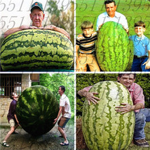 30 seed/bag giant watermelon seeds,it is so big! rare Organic Heirloom vegetable fruit seeds,Natural growth home garden planting(China)