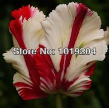 Free shipping, raw chicken blood red roses Seeds of Africa, a pack 200PCS, a rare blood roses
