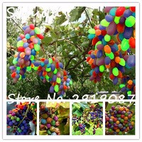 New-rare-rainbow-grape-seed-seedlings-20seeds-bag-organic-delicious-edible-fruit-seed-easy-to-grow.jpg_200x200