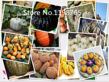 Special Price Promotion! 20 Pumpkin Seeds 10 kinds mixed packed, Vegetable Seeds High Germination DIY Garden Perennial Blooming