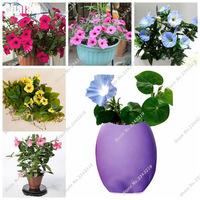 Climbing-Plant-Garden-Flower-Seeds-Hanging-Petunia-Flower-Seeds-DIY-Home-Bonsai-Pot-Planting-200-PCS.jpg_200x200