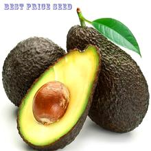 2016Sale 10pcs New Rare Green Avocado Seed Very Delicious Pear Fruit Seed Very Easy Grow For Home Garden Semente Free Shipping