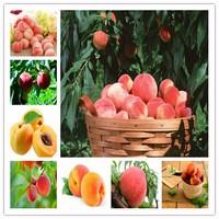 Delicious-sweet-peach-fruit-seeds-20-particles-dwarf-peach-tree-seeds-rich-peach-seeds-diy-home.jpg_200x200