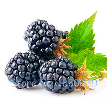 200 Seeds / Pack, full of nutrition Black Mulberry Seeds Morus Nigra Tree Garden Bush Seed DIY home garden(China)