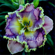 200 pcs / bag, Hemerocallis Seed, Tawny Daylily Home Garden Groundcover Plants, Potted Planting Four Seasons Flowering Plants