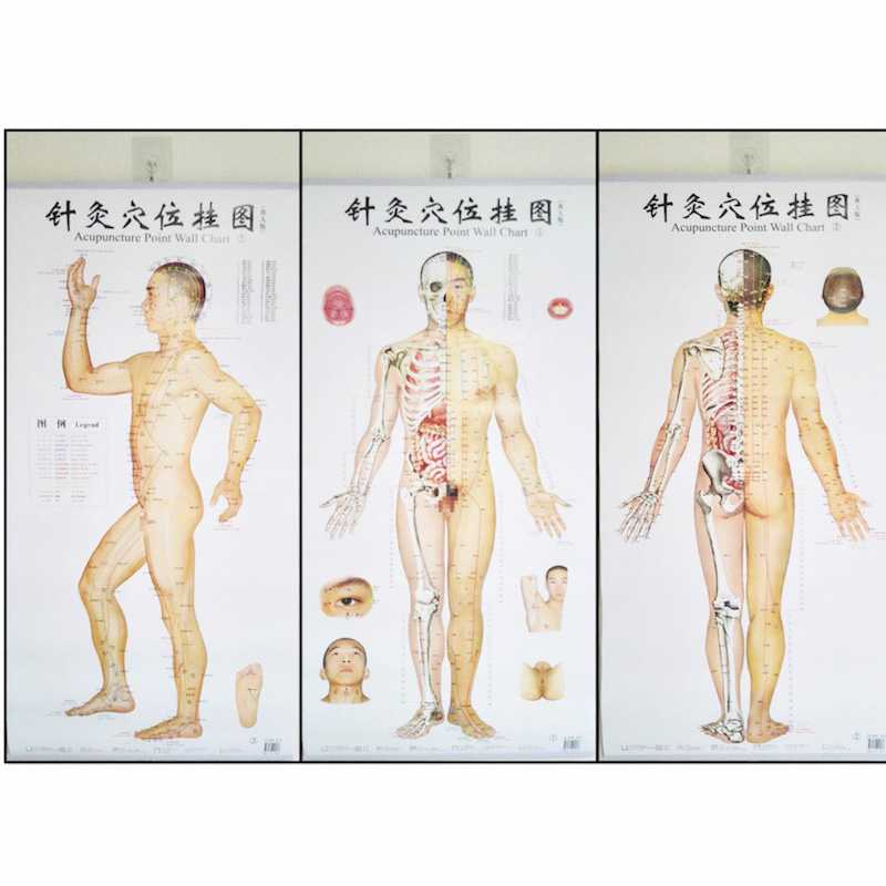 Bilingual Acupuncture Point Wall Charts  A Set (Front  Side  Back)  Real Person Chinese and English for Self Care  <br>