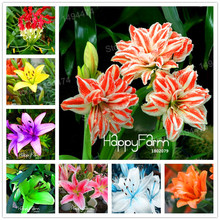 Mixed color Lily seeds cheap perfume lily seeds mixing different varieties Flower Seeds bonsai plant for home garden 100 pcs(China)