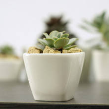 6.6cm*6.6cm*5.3cm Simple white meat more creative mini ceramic pot pots small square trapezoidal free shipping
