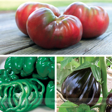 Heirloom Cherokee Purple Tomato, California Wonder Bell Pepper, Black Beauty Eggplant Vegetable Garden Combination Annual Plants(China)