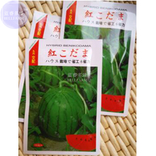 BELLFARM Gift Japanese Watermelon Green Skin Fresh Red Inside Water Melon, 200pcs 'seeds'/original pack, 15% sugar contained(China)
