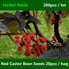 Widely Cultivated Red Castor Bean Seeds 200pcs, Medicinal Uses Ricinus Communis Herbal Seeds, Ornamental Plant Hong Bi Ma Seeds(China)