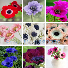 Unique 11 different colors Japanese potted bonsai DIY home garden peony seeds 12PCS(China)