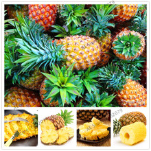 Hot Sale 103 seeds/pack Fruits and vegetables seeds pineapple fruit corn seed yellow,taste sweet(China)