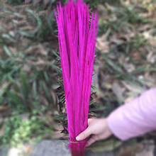 Wholesale 50Pcs Rose Red Pheasant Tail Feathers 16-18inch 40-45CM High Quality jewelry Halloween Wedding Decorations Plumes(China)