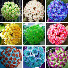 50Pcs Rare Color Hoya Seeds,Hoya Plant,Ball Orchid Seeds,Indoor Bonsai Flower ,Natural Growth Pot for Home Garden Planting(China)