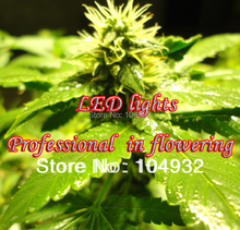 100W COB LED grow light =300W HPS Professional in flowering  More condenser More light  More energy-efficient