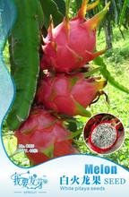 Fruit seeds white dragon fruit vegetable seeds pitaya Original Packing 40pcs/bag Home Garden DIY Free Shipping(China)