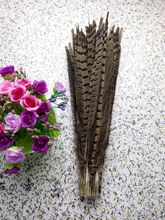 Wholesale perfect  10pcs  high quality natural Male Pheasant feathers 14-16inch/35-40cm  Decorative diy  natural colors